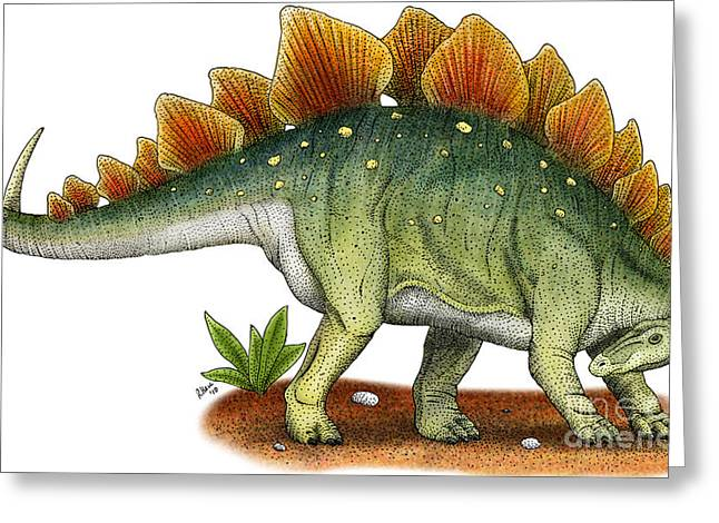 Dinosaurs Drawings Greeting Cards - Stegosaurus Greeting Card by Roger Hall and Photo Researchers