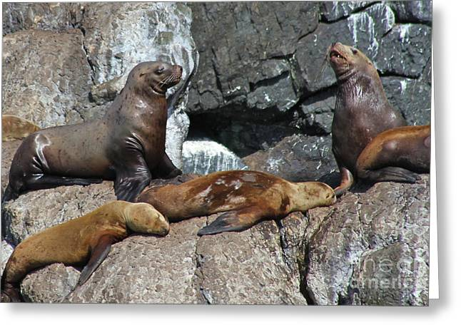 Sea Lions Greeting Cards - Steller Greeting Card by Rick  Monyahan