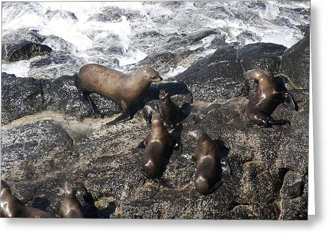 Sea Lions In The Ocean Greeting Cards - Steller Sea Lion - 0010 Greeting Card by S and S Photo