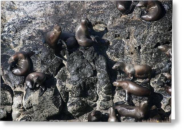 Sea Lions In The Ocean Greeting Cards - Steller Sea Lion - 0011 Greeting Card by S and S Photo