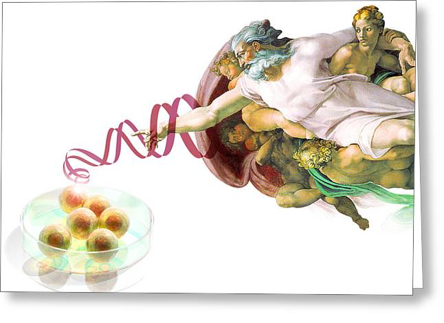 Embryo Greeting Cards - Stem Cells And God Greeting Card by Laguna Design