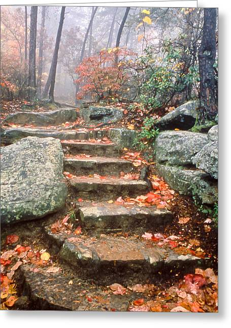 Tom And Pat Cory Greeting Cards - Steps Cloudland Canyon Greeting Card by Tom and Pat Cory