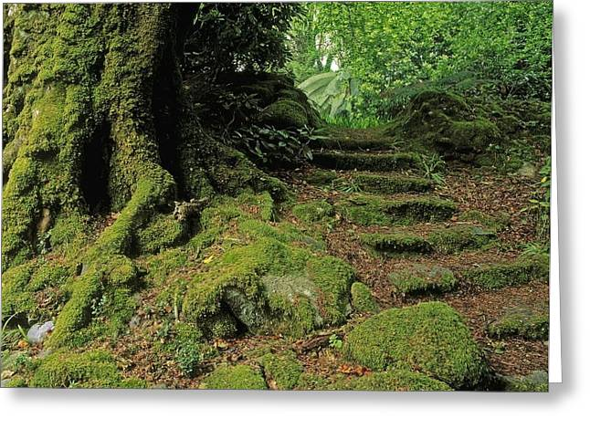 Statuary Garden Greeting Cards - Steps In The Wild Garden, Galnleam Greeting Card by The Irish Image Collection