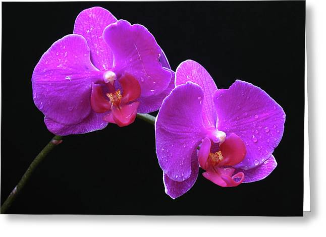 Orchid Artwork Greeting Cards - Sticking with You Greeting Card by Juergen Roth