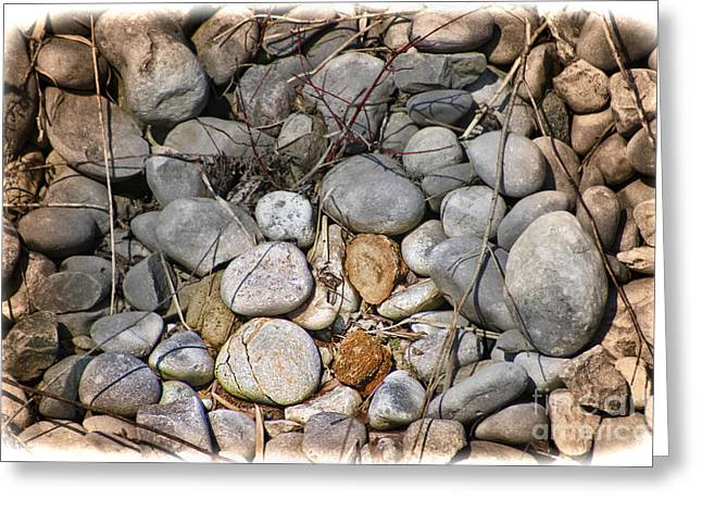 Sticks And Stones Can Hurt Greeting Card by Cathy  Beharriell