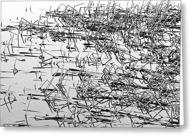 """nature Photography Prints"" Greeting Cards - Sticks in the Water Black and White Abstract Greeting Card by James BO  Insogna"