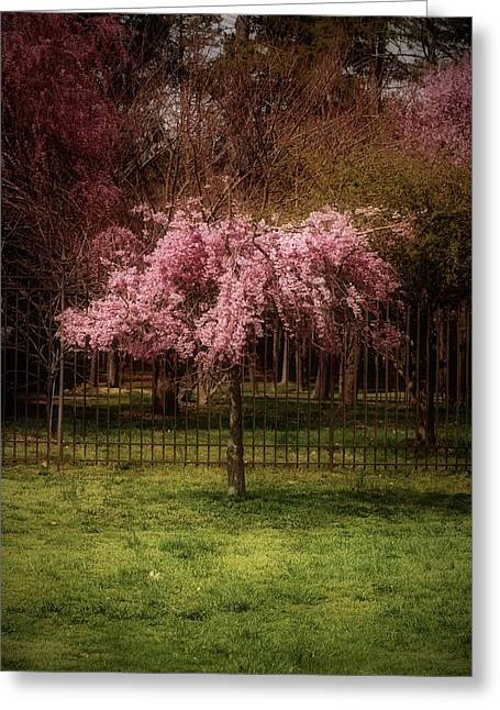 Tress Posters Greeting Cards - Still - Ocean County Park Greeting Card by Angie Tirado