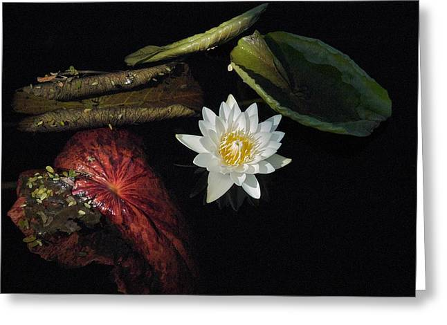 Joseph Yarbrough Greeting Cards - Still Life Greeting Card by Joseph Yarbrough