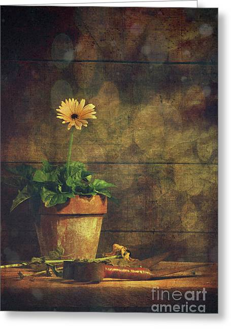 Longings Greeting Cards - Still life of yellow Gerbera daisy in clay pot Greeting Card by Sandra Cunningham