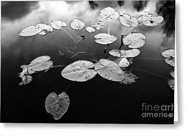 Lilly Pad Greeting Cards - Stillness Greeting Card by Scott Pellegrin