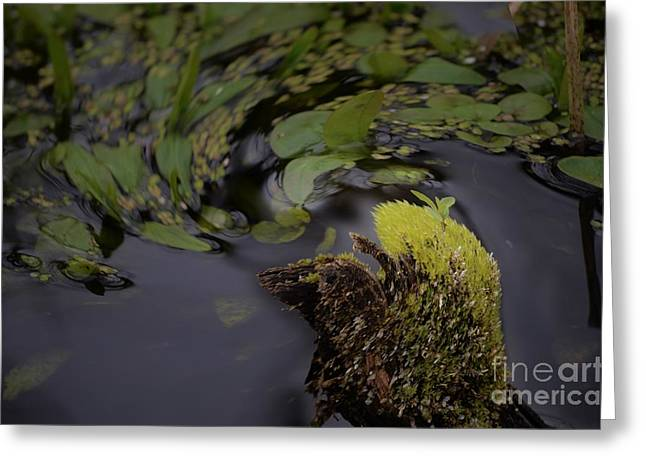 Stir Greeting Cards - Stirring The Swamp Pot Greeting Card by The Stone Age