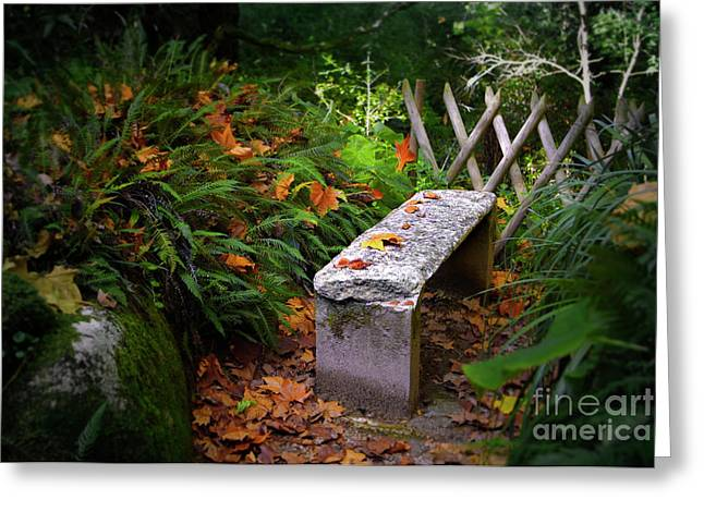 Moist Greeting Cards - Stone Bench Greeting Card by Carlos Caetano