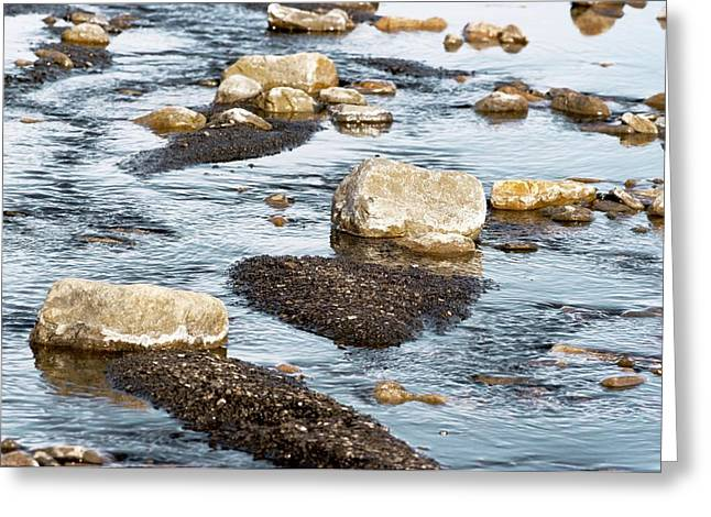 Axels Greeting Cards - Stones And Fine Sediment In A Creek Greeting Card by Dr Juerg Alean