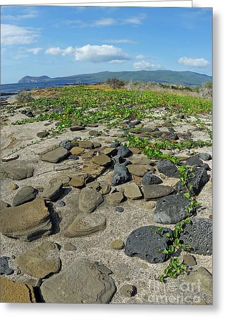 Stones On Sand At Punta Vincente Roca Greeting Card by Sami Sarkis