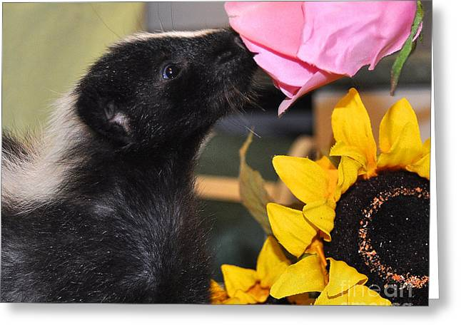 Baby Skunk Greeting Cards - Stop and smell the roses Greeting Card by Amy Warnke