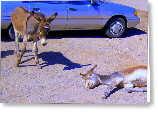 Baby Jackass Greeting Cards - STOP Dont Feed Me or I Will Get a Belly Ache Greeting Card by Lessandra Grimley