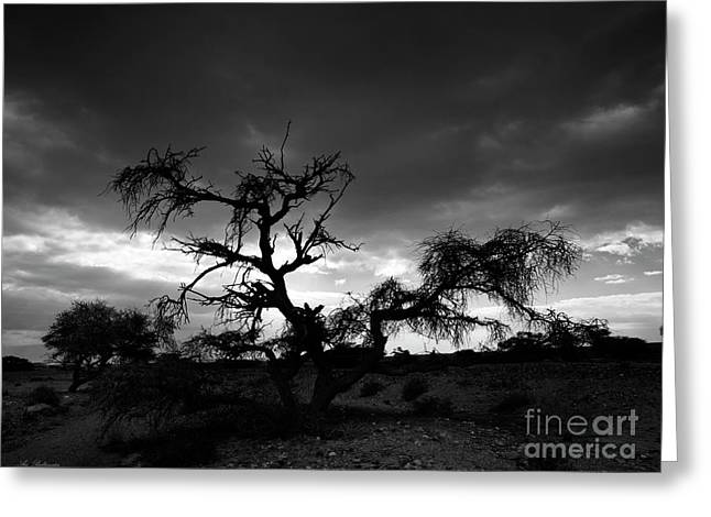 Black And White Greeting Cards - Storm clouds. Greeting Card by Arik Baltinester