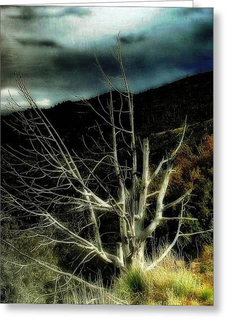 Jemez Mountains Greeting Cards - Storm over the Jemez Mountains Greeting Card by Ellen Heaverlo