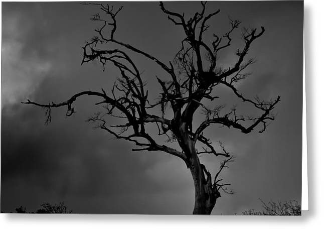 Kevin Barske Greeting Cards - Stormy Tree Greeting Card by Kevin Barske