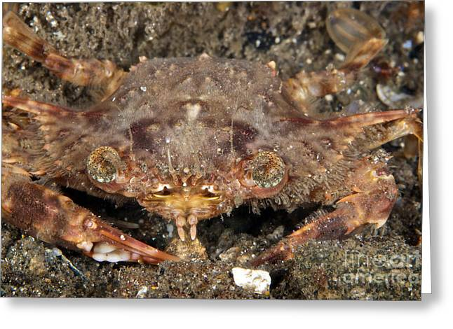 Decapoda Greeting Cards - Strange Looking Crab, Papua New Guinea Greeting Card by Terry Moore