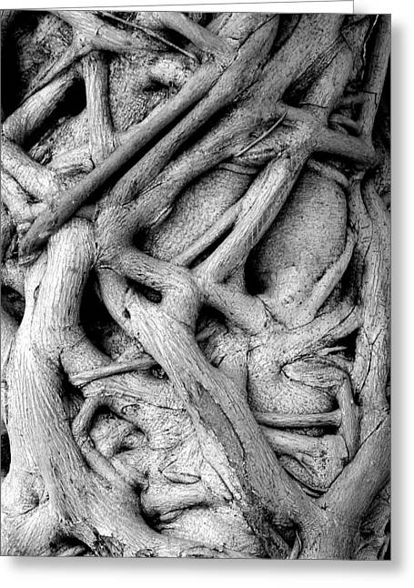 Tree Roots Greeting Cards - Stranglehold Greeting Card by Bruce J Robinson