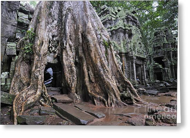 Tree Roots Greeting Cards - Strangler fig tree roots covering temple Greeting Card by Sami Sarkis