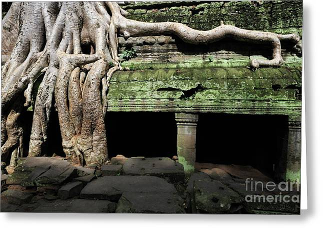 Temple Of Ta Prohm Greeting Cards - Strangler fig tree roots on temple Greeting Card by Sami Sarkis