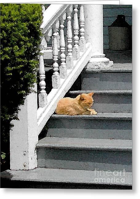 Stratford Ct Greeting Cards - Stratford Cat Nap Greeting Card by Melissa A Benson