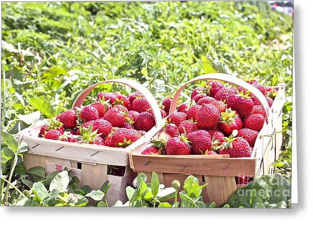 Baskets Of Strawberries Greeting Cards - Strawberry Harvest Greeting Card by Carol Fielding