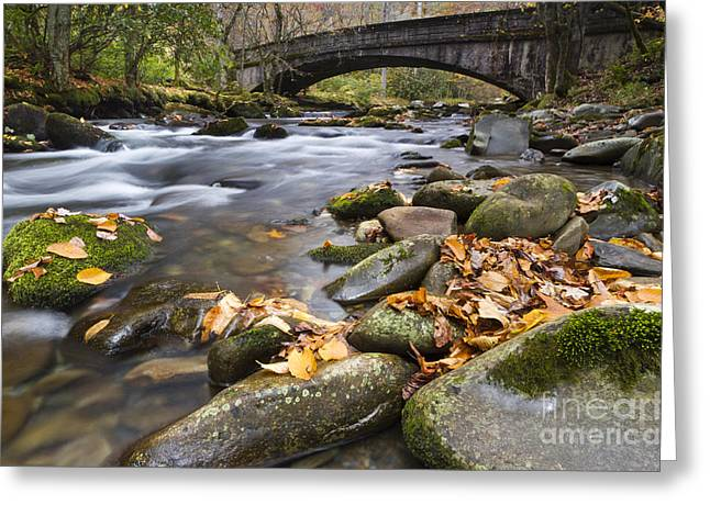 Stream Greeting Cards - Stream in the Great Smokie Mountain National Park Greeting Card by Dustin K Ryan