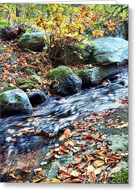 Red Leaves Greeting Cards - Stream In The Woods Greeting Card by HD Connelly