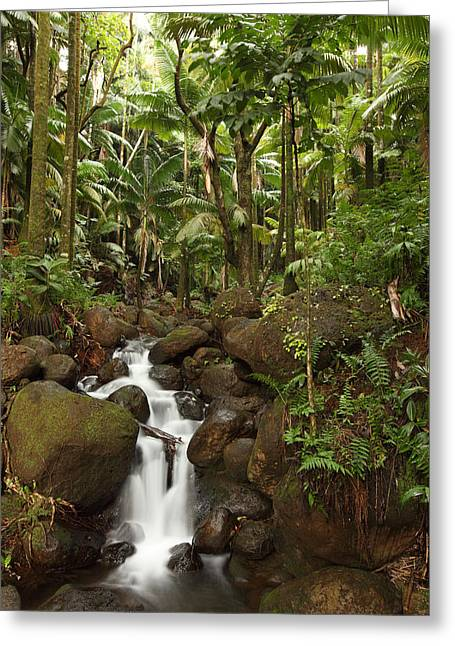 Growing Out Of Rock Greeting Cards - Stream Running Through The Rainforest Greeting Card by Robert Postma