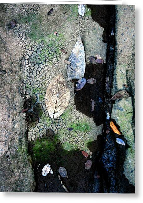 Abstract Water And Fall Leaves Greeting Cards - Streambed Leaves 1 Greeting Card by Jennifer  Bright