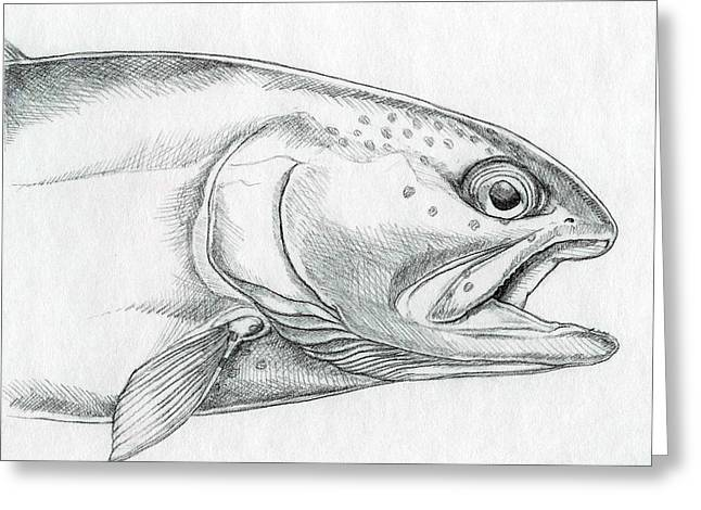 Rainbow Trout Drawings Greeting Cards - Streamside Rainbow Greeting Card by Jeremiah Welsh
