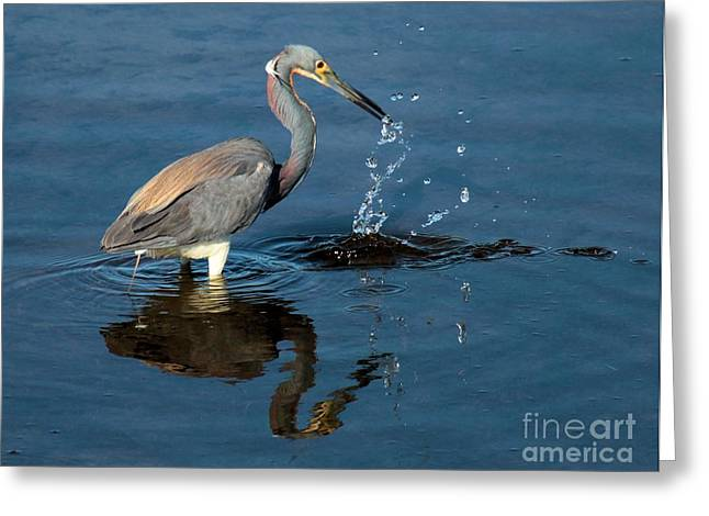 Tri-colored Heron Greeting Cards - Strike Out Greeting Card by Adam Jewell