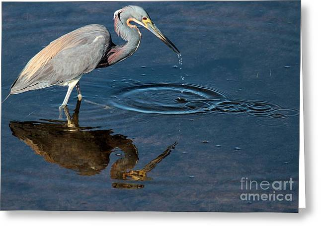 Cape Hatteras National Seashore Greeting Cards - Striking Out Greeting Card by Adam Jewell