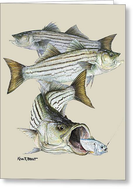 Kevin Brant Greeting Cards - Striped Bass Greeting Card by Kevin Brant