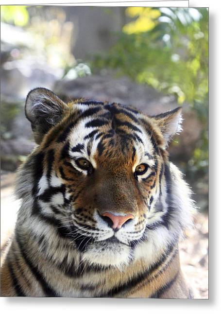 Fur Stripes Greeting Cards - Striped Beauty Greeting Card by Marilyn Hunt