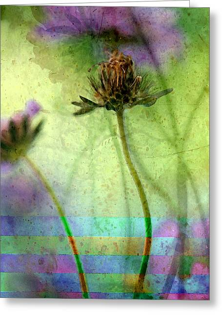 Photo-montage Greeting Cards - Striped Celebration Greeting Card by Bonnie Bruno