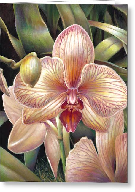 Phalaenopsis Orchid Greeting Cards - Striped Peach Orchid Greeting Card by Nancy Tilles