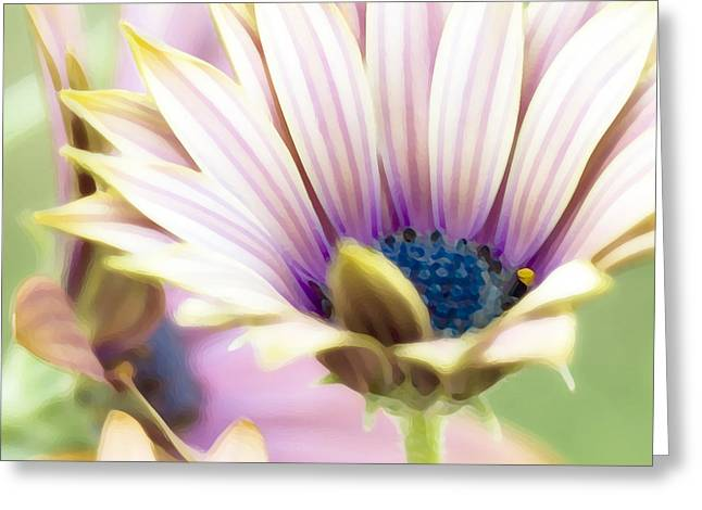Dry Brush Greeting Cards - Striped Petals Greeting Card by Bonnie Bruno