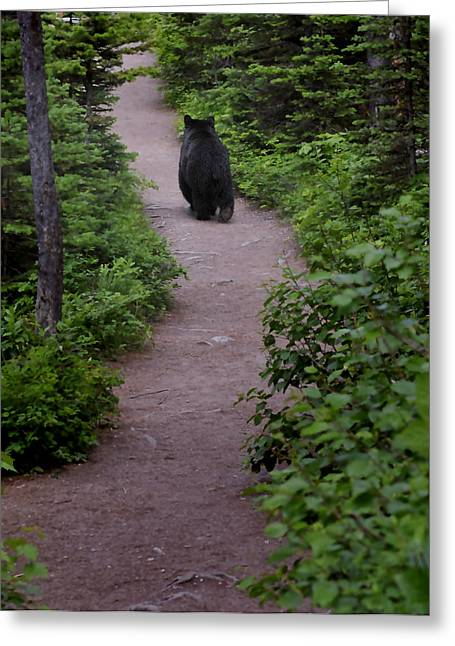 Photographs With Red. Greeting Cards - Strolling Bear Greeting Card by Don Wolf