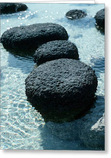 Shark Fossil Greeting Cards - Stromatolites Greeting Card by Georgette Douwma