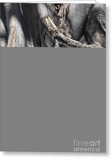 Tree Roots Greeting Cards - Strong Roots in Florida Greeting Card by Carol Groenen