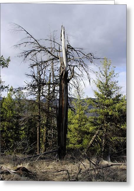 Struck By Lightning Tree Art Greeting Card by John  Greaves