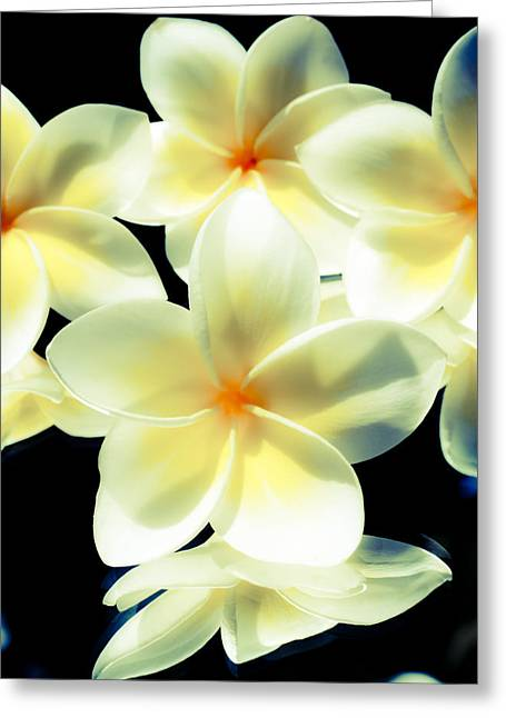 Close Focus Floral Greeting Cards - Studio Plumerias Greeting Card by Joe Carini - Printscapes