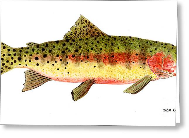 Thom Glace Greeting Cards - Study of a Greenback Cutthroat Trout Greeting Card by Thom Glace