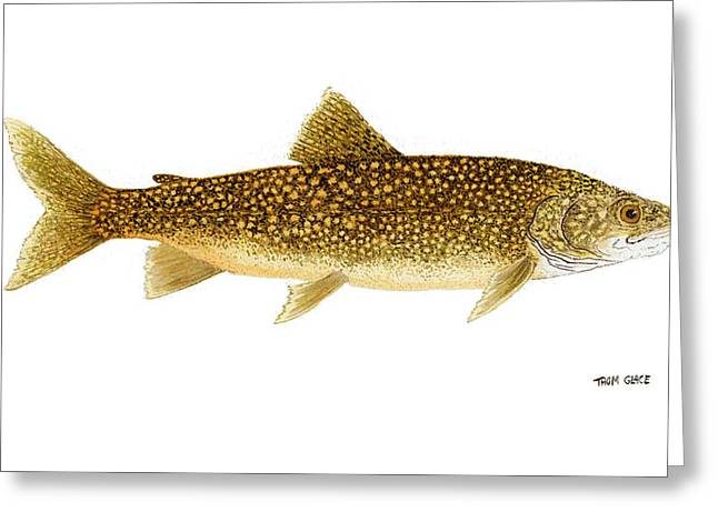 Trout Fishing Greeting Cards - Study of a Lake Trout Greeting Card by Thom Glace
