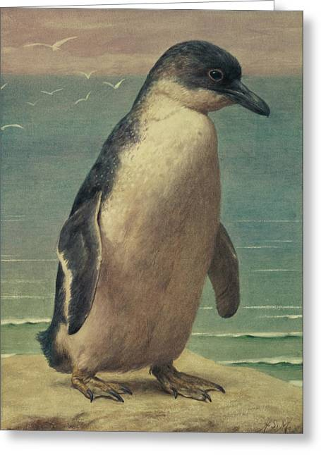 Water-colour Greeting Cards - Study of a Penguin Greeting Card by Henry Stacey Marks