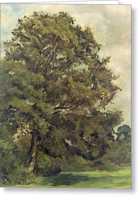 1828 Greeting Cards - Study of an Ash Tree Greeting Card by Lionel Constable